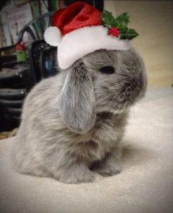 bunny-christmas